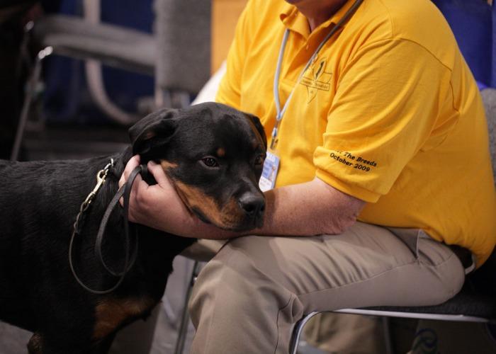 Служба безопасности в лице соседа с бойцовской собакой